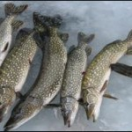 Annual Cy Perry Memorial Pike Ice Fishing Tournament