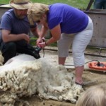 BIA Annual Lambs Down Park Festival June 16