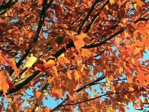 1000 Islands Fall Foliage