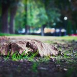 Leaf and Yard Waste Cleanup