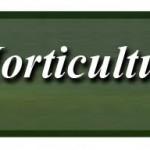 Judy Wall – Alpines, Succulents & Rockery Plants