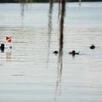 Lake Virginia Watershed Cleanup & Volunteer Appreciation Breakfast